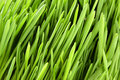 Green grass macro Stock Photos