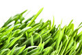 Green grass macro Royalty Free Stock Image
