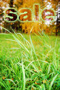 Green grass on a meadow with a word  Stock Images