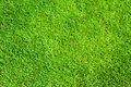 Green grass natural background photo Royalty Free Stock Images