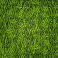Green grass. Natural background. Texture. Tall grass. Fresh spring green grass.