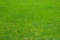 Green grass natural lawn photographed just after mowing Stock Photography