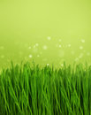 Green grass over blurred nature background with fantasy shiny lights Stock Photo