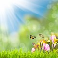 Green grass over sunlight spring bokeh and Stock Image