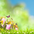 Green grass over sunlight spring bokeh and Royalty Free Stock Photos