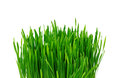 Green grass over white background Stock Photos