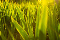 Green grass pattern an image of Royalty Free Stock Photography
