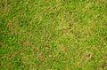 Green grass photo background. Green grass soccer field background.