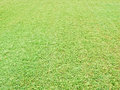 Green grass photo of fresh Royalty Free Stock Photo