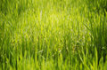 Green grass photo of the spring sunny background Stock Photo
