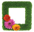 Green grass picture frame with flowers Royalty Free Stock Photo