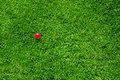 Green grass pink ball Stock Image