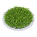 Green grass on a plate isolated render white background Stock Photo