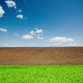 Green grass and plowed fields under blue sky black Stock Image
