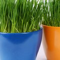 Green grass in pot a background as Royalty Free Stock Photography