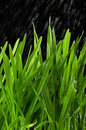 Green grass and rain Royalty Free Stock Photos