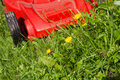 Green grass and red lawn mower in summer day Royalty Free Stock Images