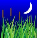 Green grass with reeds and moon on a background night sky illustration Stock Images