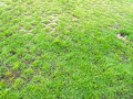 Green grass the reen Stock Photography