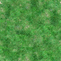 Green grass seamless tile texture lawn photographic background Royalty Free Stock Image