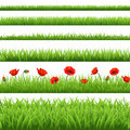 Green Grass Set With Red Poppy Royalty Free Stock Photo