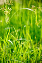 Green grass - shallow depth of field Stock Images