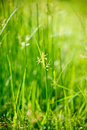 Green grass - shallow depth of field Royalty Free Stock Photo