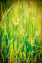 Green grass shallow depth of field vintage retro hipster style image very Stock Photos
