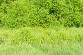 Green grass and shrubs on a sunny day Stock Photo