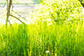 Green grass and shrubs on a sunny day Royalty Free Stock Image