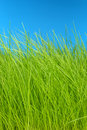 Green grass & sky eco-friendly background Stock Photography