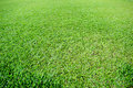 Green grass soccer pitch is the nature Stock Photography