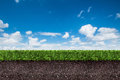 Green grass with soil on blue sky. Royalty Free Stock Photo