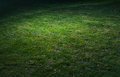 Green grass spot vignette with of light with Stock Photos