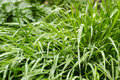 Green grass spring with dew close up Stock Image