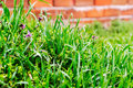 Green grass spring with dew close up Stock Images