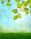 Green grass spring fantasy Royalty Free Stock Photography