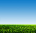 Green grass on spring field against blue clear sky Royalty Free Stock Photo