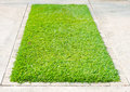 Green grass on square concrete block Royalty Free Stock Photo