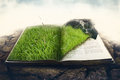 Green grass with stone on a book Royalty Free Stock Photo