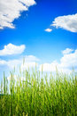 Green grass on summer day over beautiful sky Stock Photos