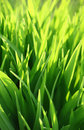 Green grass and sunlight Stock Images