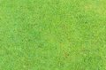 Green grass surface texture of background Stock Photography