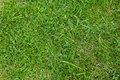 Green Grass Texture Royalty Free Stock Photography