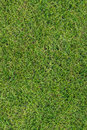 Green grass texture background Stock Photography