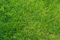 Green grass texture background horizontal close up Stock Photo