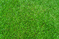 Green grass texture background for soccer sport or football spor