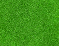Green grass texture beautiful on golf course Stock Images