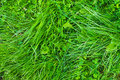 Green grass texture bright textured background Royalty Free Stock Photos
