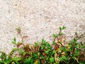 Green grass texture Crack with concrete background Royalty Free Stock Photo